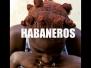 Habaneros Meetings in Havana